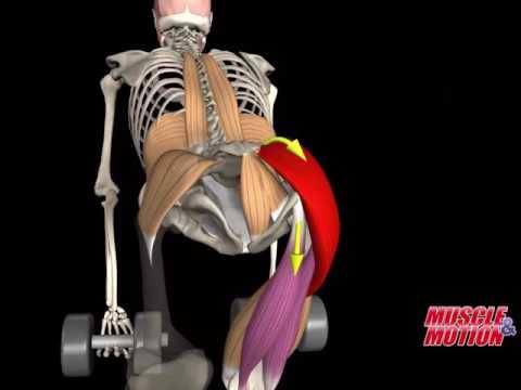 Ćwiczenia na poziomym pasku na różnych grup mięśni wideo