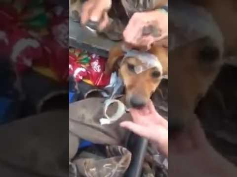 Anteprima Video Eroi si nasce... grazie per aver aiutato questo cane dalla morte sicura