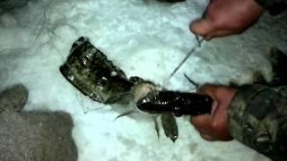 Смотреть онлайн Двойной улов щука и налим на одном крючке