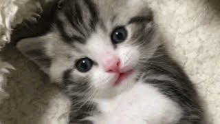 This Adorable Kitten Is Too Cute For Words
