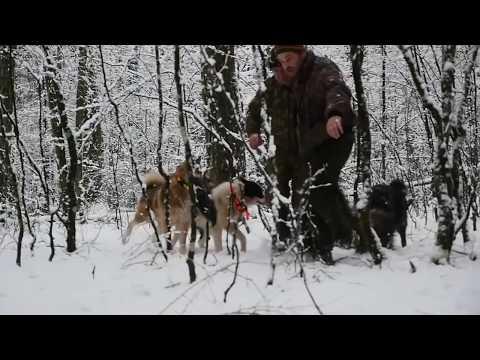 Pompalı ile Azılı Domuz Avı ...!!! Wild Boar Hunting,Schwere Sauhatz Mit Schrotflinte