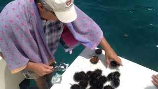 для гурманов: выедание живых морских ежей, только что выловленных. Порто Хели, Греция
