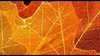 Chicane - Autumn Tactics