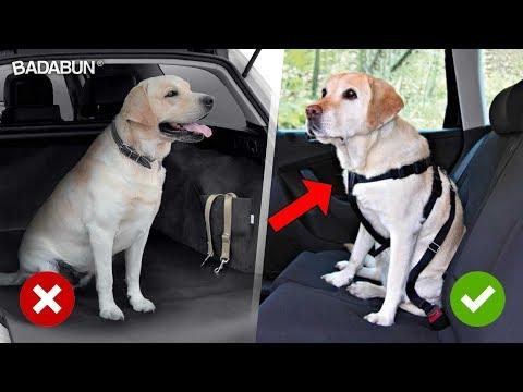 Mira cómo transportar a tu perro para evitar que muera