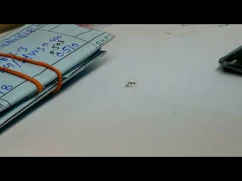 В Италии из ювелирного магазина муравей пытался украсть бриллиант