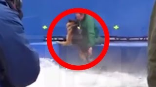 Hollywood Stunt Dog Forcefully Pushed Into Terrifying Water Conditions