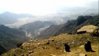 preview picture of video 'baboons on way to Hada, Taif'