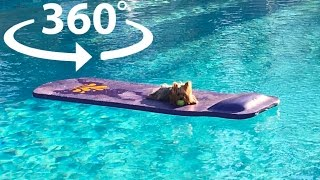 Puppy Loves Lounging by the Pool - Frank