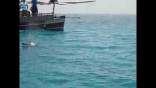 preview picture of video 'DOLPHINS SHOW   ESCURSIONE WASINI ISLAND KENYA'