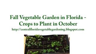 Fall Vegetable Garden In Florida - October