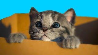 МОЙ Маленький КОТЕНОК / СИМУЛЯТОР котика / игра про питомца как мультик для детей #ПУРУМЧАТА