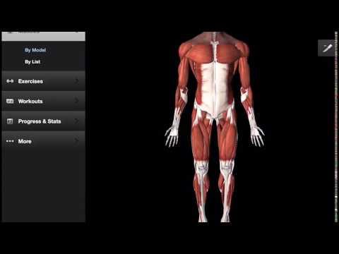 Laugmentation des poitrines sous le muscle