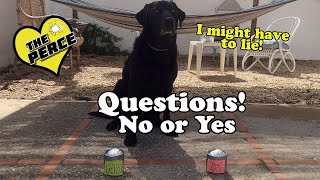 Our Dog Percy The Black Labrador Answers YES NO
