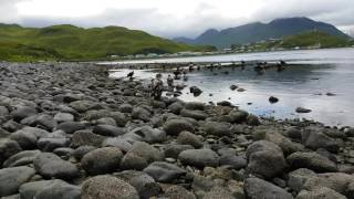 Unalaska Bay Bald Eagles