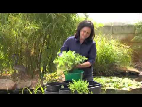 Floating Baskets For Water Plants - How To Get Started