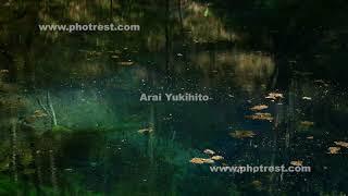 春の青池の動画素材・4K写真素材