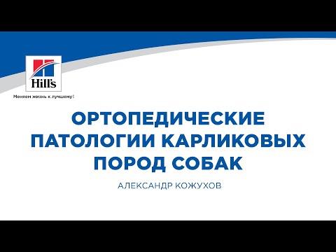 Вебинар на тему: «Ортопедические патологии карликовых пород собак».  Лектор – Александр Кожухов