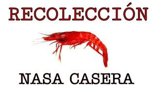 CEBO Para Pescar (nasa Casera).