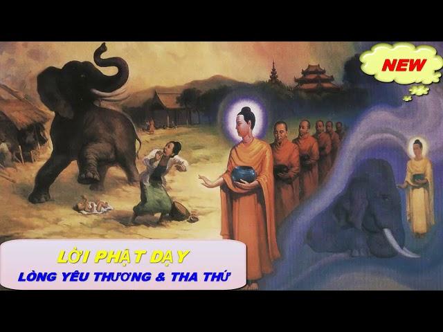 Những Lời Phật Dạy Lòng Yêu Thương & Tha Thứ