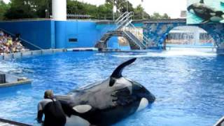 Косатки, Sea World, Orlando. Shamu.