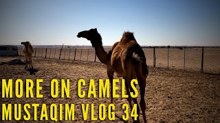 preview picture of video 'More On Camels ~ MUSTAQIM VLOG 34'