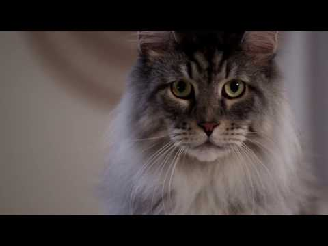 PetSafe Commercial for PetSafe ScoopFree Litter Box (2016 - 2017) (Television Commercial)