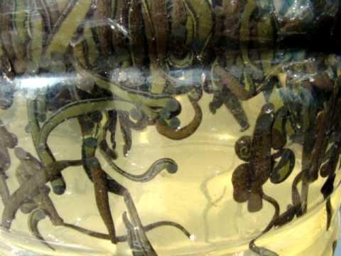 Buhay pagkatapos ng kamatayan ng parasites
