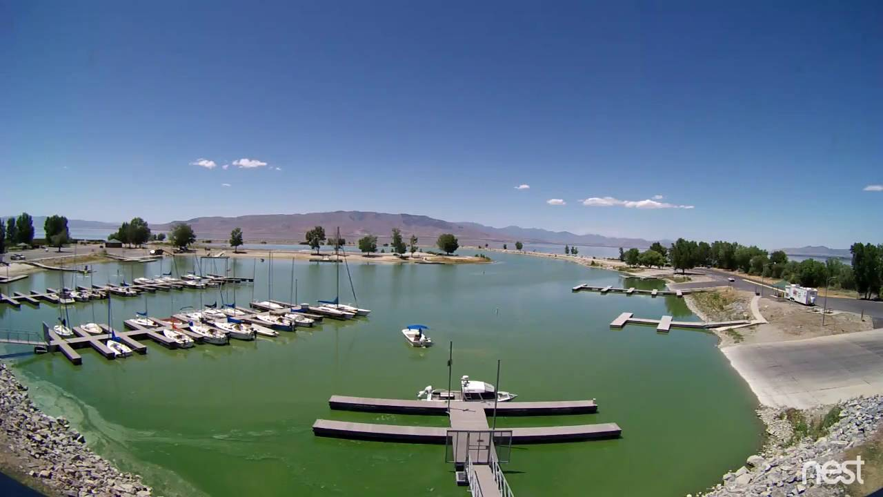 Gross Algae Bloom Engulfs A Lake Full Of Human Waste