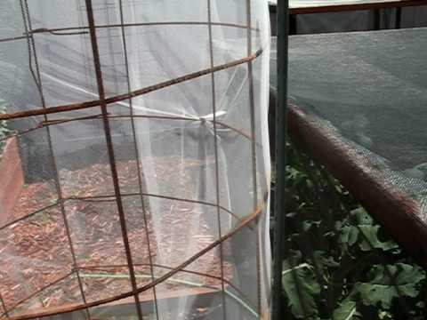 Paggamot ng kuko halamang-singaw na tumatakbo katutubong remedyong