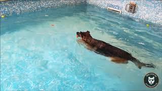 Piscine : Arès s'amuse au Dog Pool !