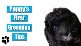 Puppy's First Grooming Tips