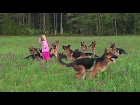רוקדת עם זאבים - ילדה בת 5 ו-14 כלבים...