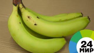 Бананы с кокаином: в Испании перехвачена рекордная партия наркотиков - МИР 24
