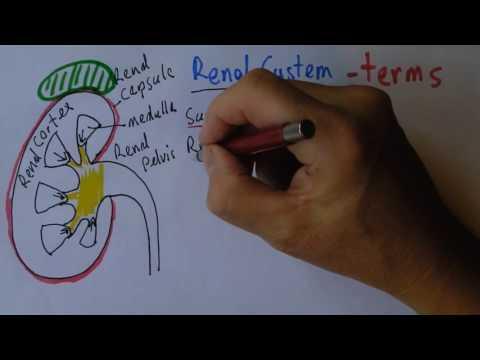 Tratamento cirúrgico de cancro da próstata