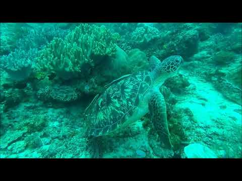turtle (...footage by Ralf Lipphardt)