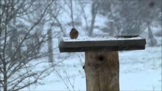 preview picture of video 'Dos dies de neu a Les Planes de Son (Alt Àneu) - Jornades de meteorologia i muntanya-27 i 28/4/2013'