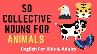 50 Collective Nouns For Animals