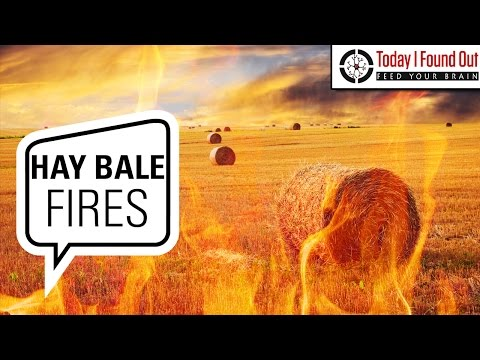 Why Does Moist Baled and Stacked Hay Spontaneously Catch Fire?