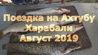 Совет астрахань на рыбалка в августе