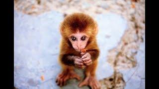 Смешные обезьяны | Лучшая подборка видео приколов с обезьянками (Часть 3)