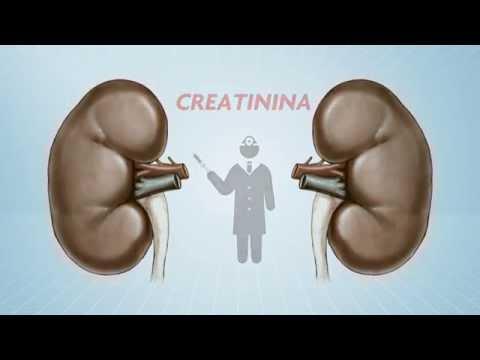 Saúde: Como saber se os seus rins estão doentes?