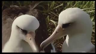 The Tick and the Bird (Wildlife Documentary)
