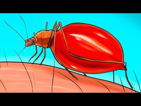 Esto Es Lo Que Le Sucede a Tu Cuerpo Cuando Un Mosquito Te Pica