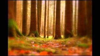 Märchenwald von Nathalie Bird