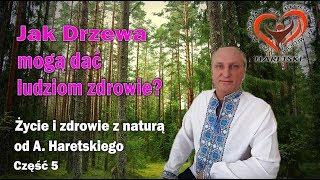 Jak Drzewa Mogą Dać Ludziom Zdrowie? Część 5. Życie I Zdrowie Z Naturą Od A. Haretskiego.