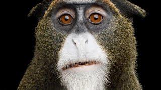 STRANGEST Monkeys In The World