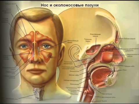 Отзывы о лечении гепатита с в санкт-петербурге