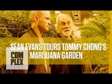 Tommy Chong's Medical Marijuana Garden   Complex