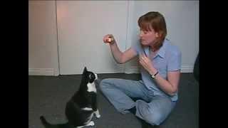 Toilet Train Your Cat