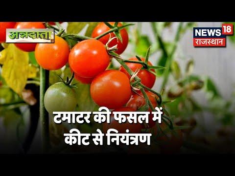 Annadata | टमाटर की फसल में कीट रोग नियंत्रण | Pesticides For Tomato Plants | 13 April 2021